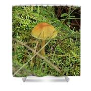 Mushroom And Moss Shower Curtain