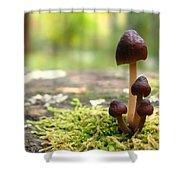 Mushroom Cluster Shower Curtain