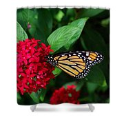 Musing Monarch Shower Curtain