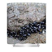 Mussels Rock Shower Curtain