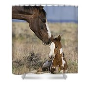 Mustang Mare And Foal Shower Curtain