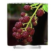 My Blackberries Shower Curtain