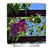 Napa Valley Inglenook Vineyard -2 Shower Curtain