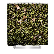 Nature Detail Shower Curtain