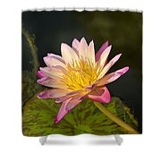 Natures Brilliance Shower Curtain