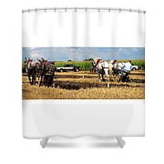 Neck And Neck Shower Curtain