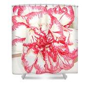 Nice Carnation Shower Curtain