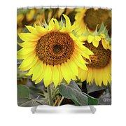 Nice Sunflowers Shower Curtain