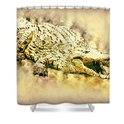 Nile River Crocodile Shower Curtain