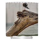 Gull On Driftwood Shower Curtain