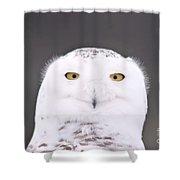 Snowy Owl 3256 A.k.a. Smiling Owl Shower Curtain