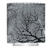 oak Shower Curtain