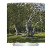 Oaks Shower Curtain by Marv Anderson