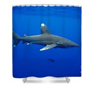 Oceanic Whitetip Shark Shower Curtain