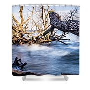 Old Dead Trees On Shores Of Edisto Beach Coast Near Botany Bay P Shower Curtain