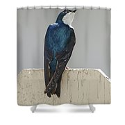 Ooooh My Swallow Shower Curtain