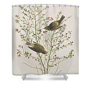 Orange Crowned Warbler Shower Curtain