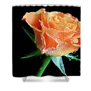 Orange Peach Rose Shower Curtain by Tracy Hall
