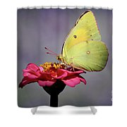 Orange Sulphur Butterfly Portrait Shower Curtain