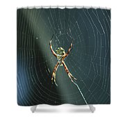 Orb Weaver Spider And Web Shower Curtain