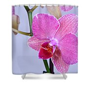 Orchards Shower Curtain