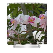 Orchid Bunch Shower Curtain