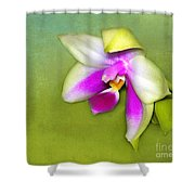 Shy Orchid  Shower Curtain