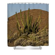 Organ Pipe Cactus Shower Curtain