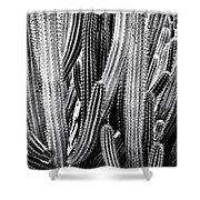 Organ Pipe Cactus Shower Curtain