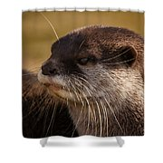 Oriental-small-clawed-otter Shower Curtain