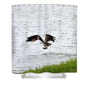 Osprey Fishing In The Afternoon Shower Curtain