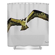 Osprey Looking For Lunch Shower Curtain
