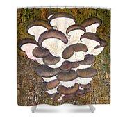 Oyster Mushroom Shower Curtain