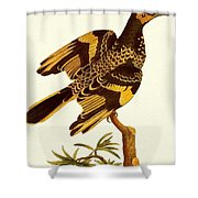 pa FB JamesSowerby RegentHoneyeater Penny Olsen Shower Curtain