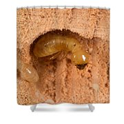 Pacific Dampwood Termites Shower Curtain