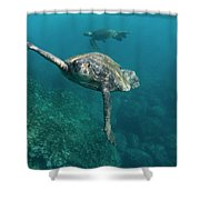 Pacific Green Sea Turtle Chelonia Mydas Shower Curtain
