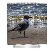 Padre Island National Seashore  Shower Curtain