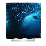 Palau, Diving Shower Curtain by Dave Fleetham - Printscapes
