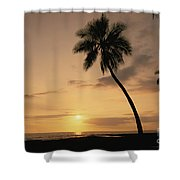 Palm At Sunset Shower Curtain