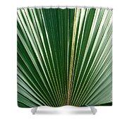 Palm Shower Curtain