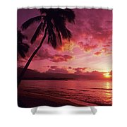 Palms Against Pink Sunset Shower Curtain