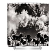 Palms Blowing In The Wind Shower Curtain