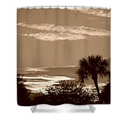 Palms In The Clouds Shower Curtain