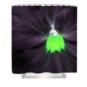 Pansy Power 73 Shower Curtain