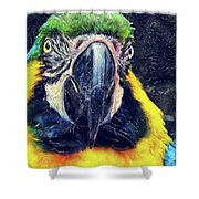 Parrot Art  Shower Curtain