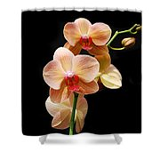 Peach Orchids Shower Curtain