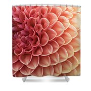 Peachy Dahlia Shower Curtain