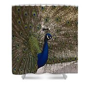 Peacock Close-up Shower Curtain