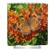 Pearly Crescentspot Butterfly Shower Curtain