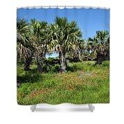 Pelican Island In Florida Shower Curtain